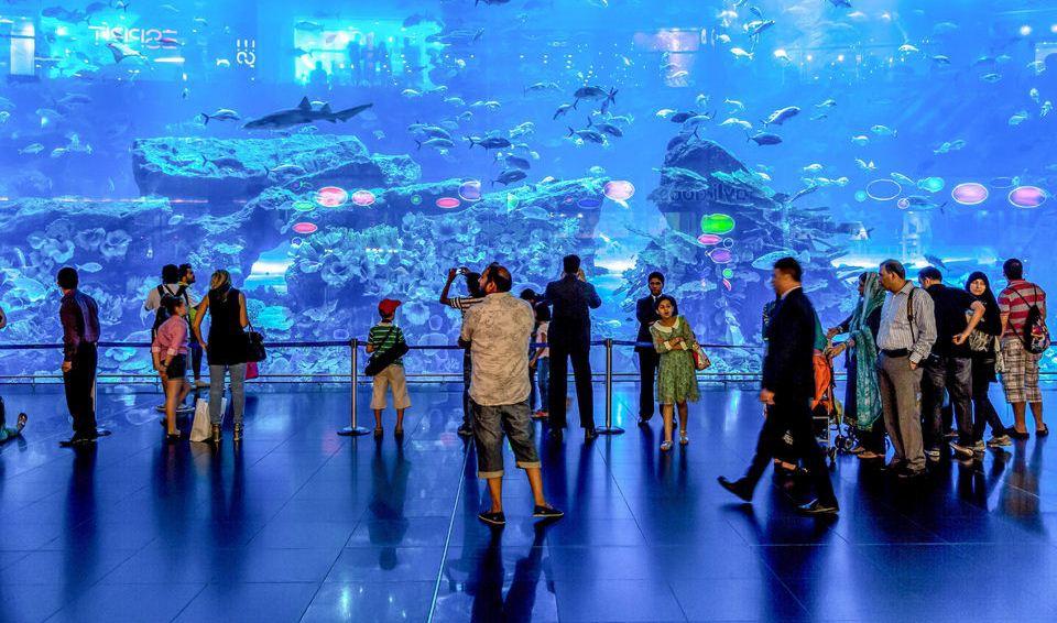Skip The Line Dubai Aquarium And Underwater Zoo Explorer Brand Gid Uae